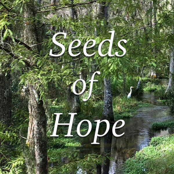Seeds of Hope: Homilies by Fr. Mike Muhr Podcast Artwork Image