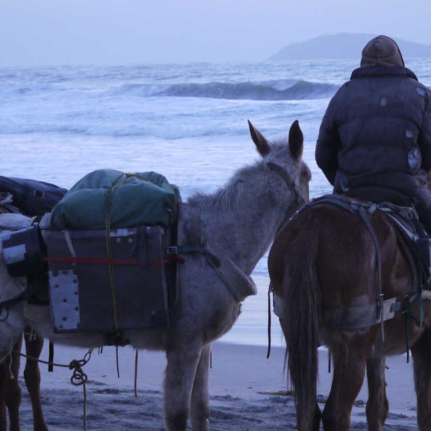 Independent Filmmaker John McDonald - Documentary 3 Mules Movie