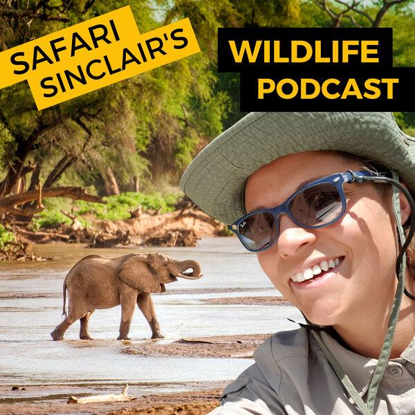 Safari Sinclair's Wildlife Podcast Podcast Artwork Image