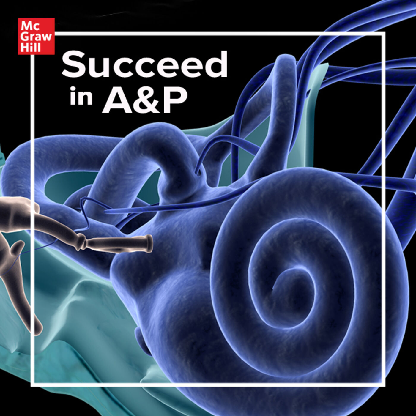 Succeed In A&P on Apple Podcasts