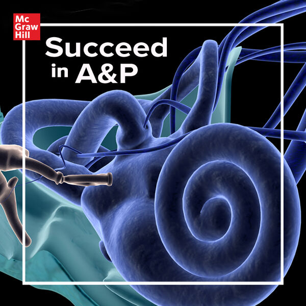 Succeed In A&P Podcast Artwork Image