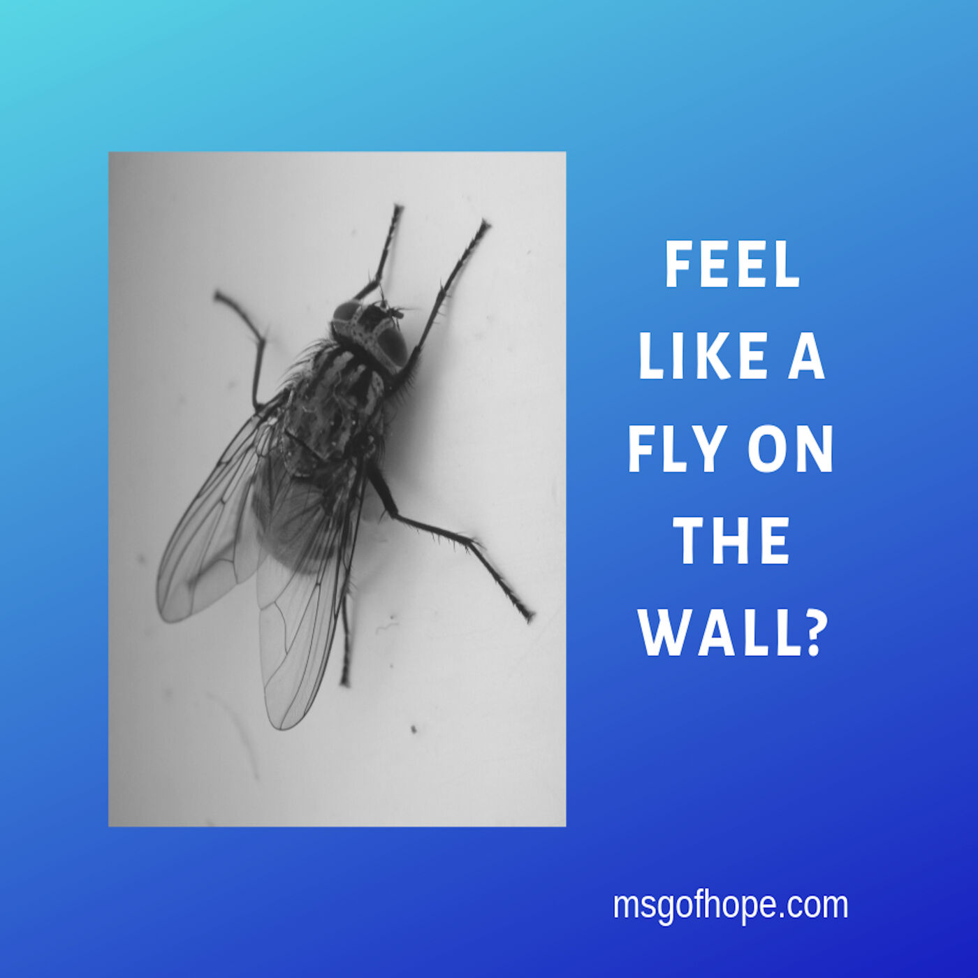 Feel Like A Fly On The Wall? - Episode #34