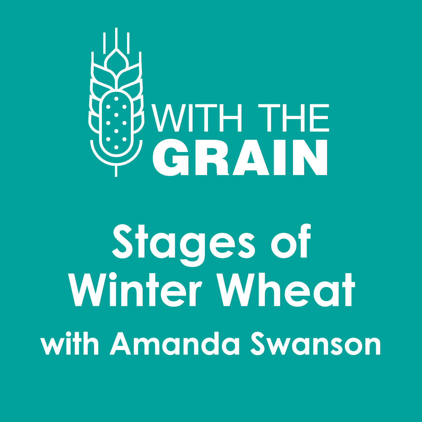 Stages of Winter Wheat, with Amanda Swanson