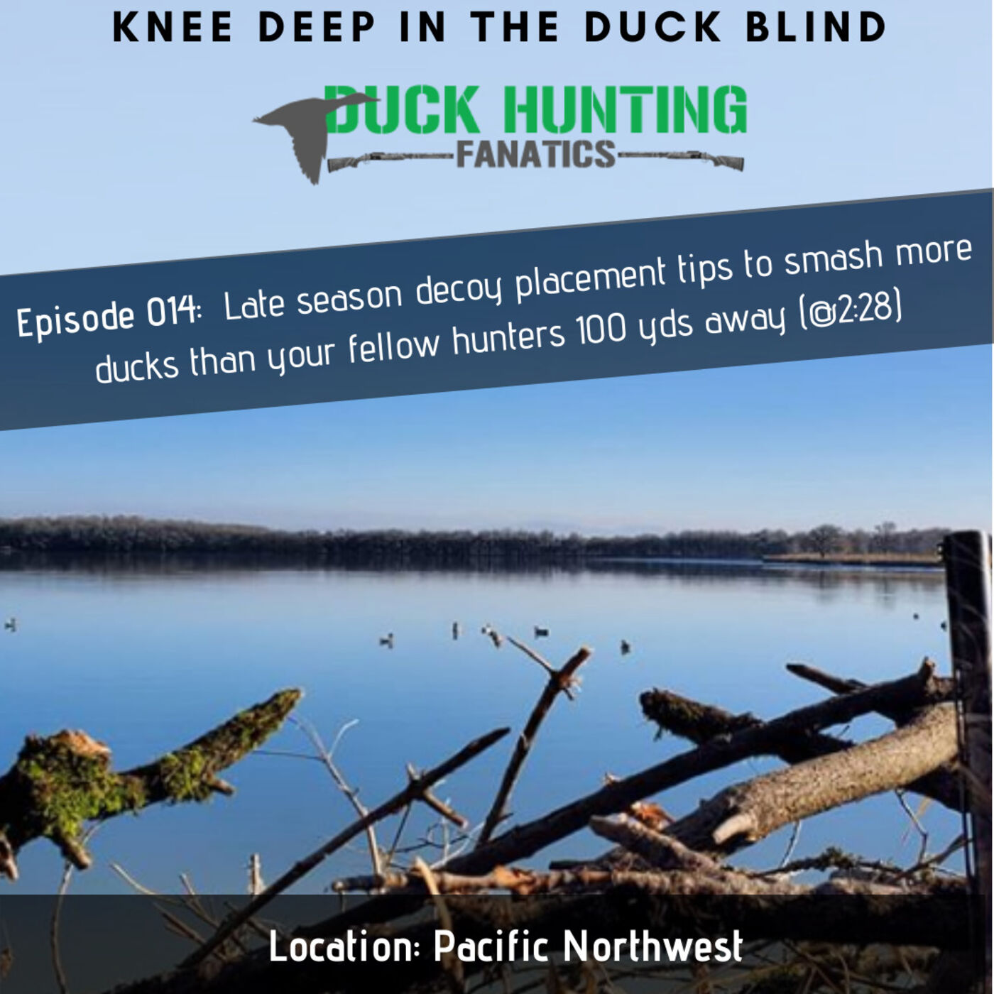 Outsmarting ducks with late season decoy placement tips... + Pacific NW Migration Report