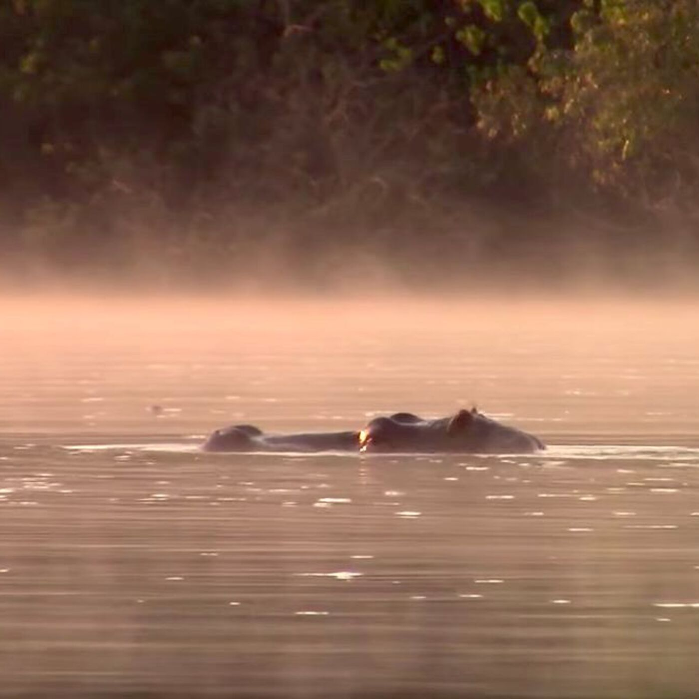 Kayak the Kwanza: The World-Record Paddle Down Angola's Longest River with Travel Author Oscar Scafidi