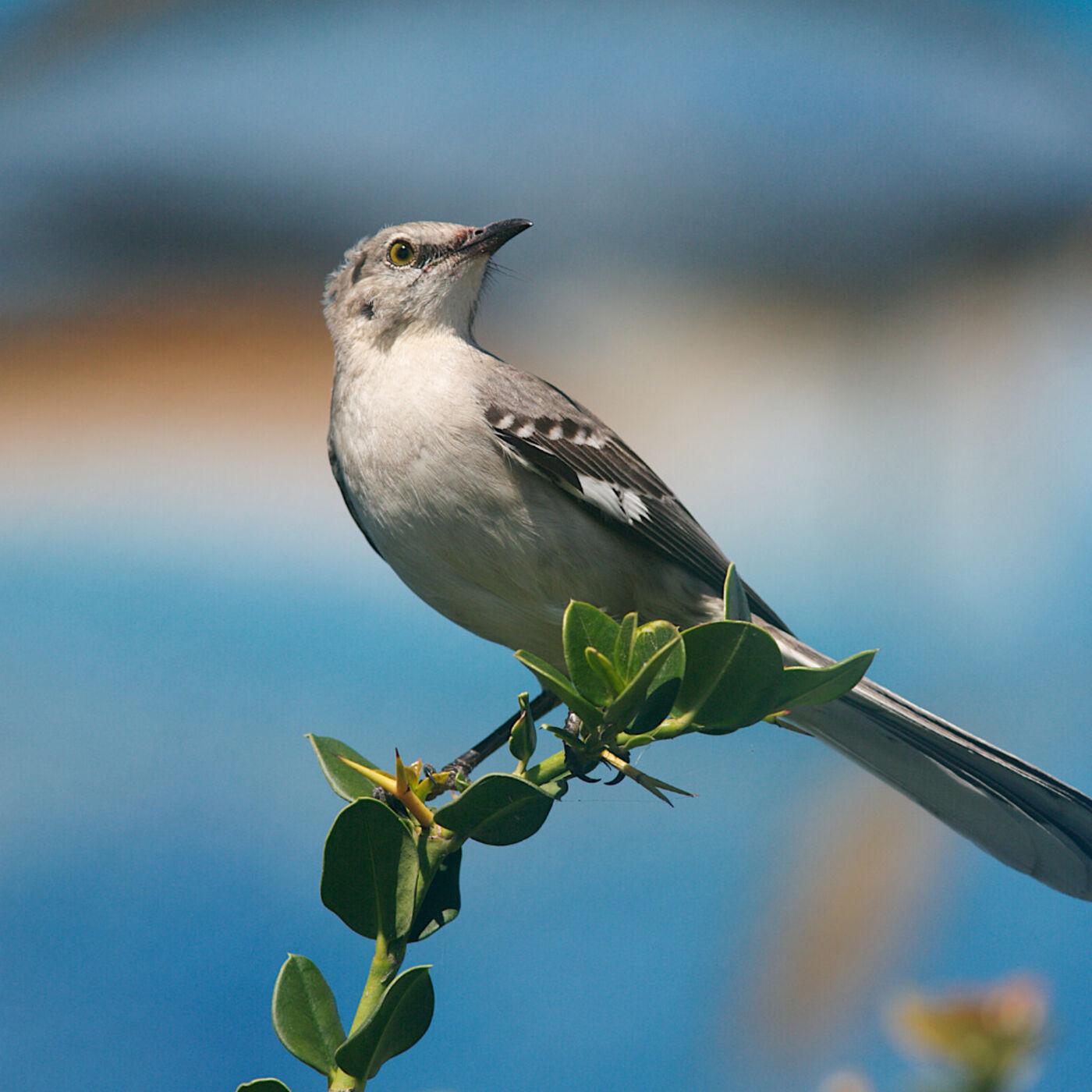 Gardening for Attracting Wild Birds