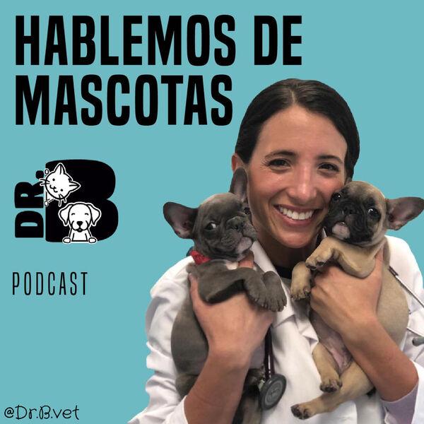 Hablemos de Mascotas con Dr.B Vet  Podcast Artwork Image