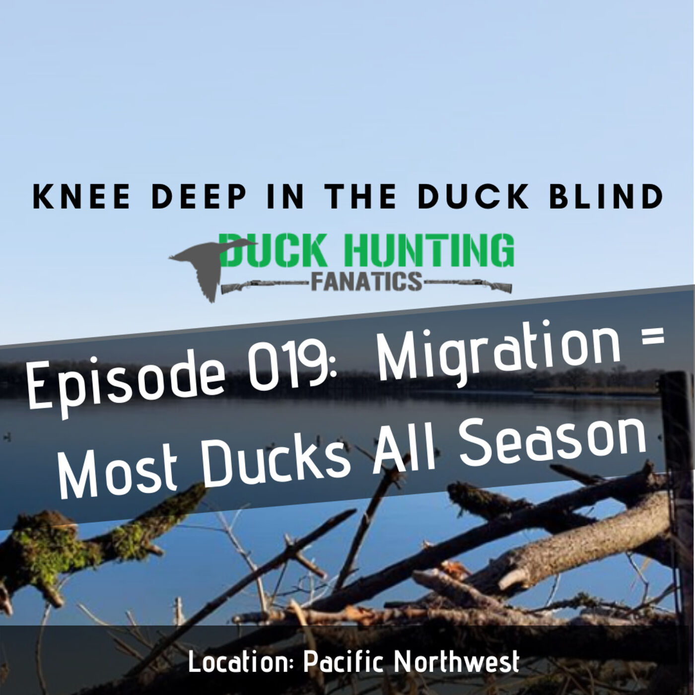 Migration Alert: Pacific NW's most ducks all year