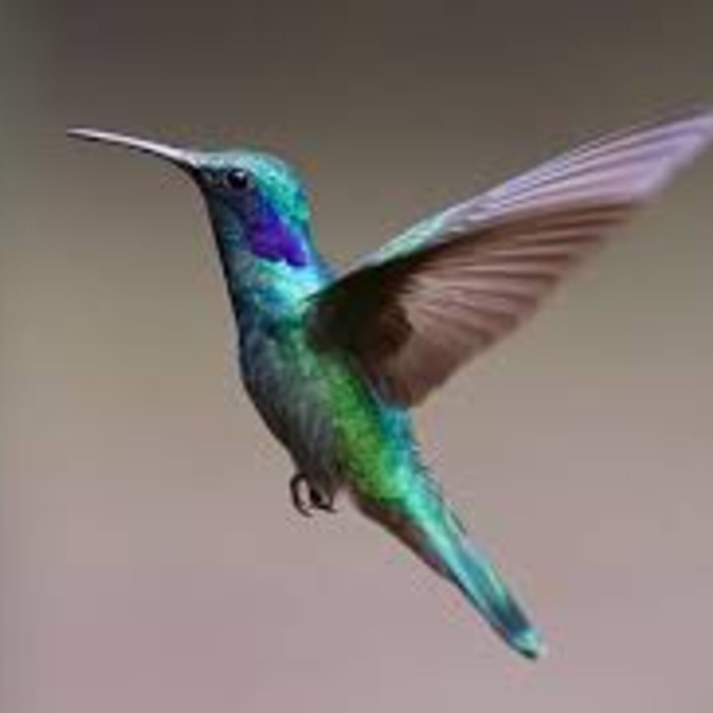 7. Hummingbirds Can Fly Backwards ... But We Are Looking Forwards With This One!  Confused? Then Listen Up!