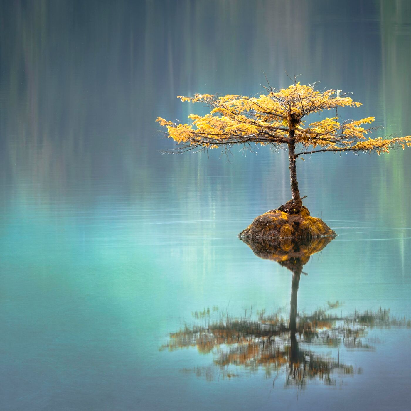 Tao Te Ching Verse 76: Staying Compassionate