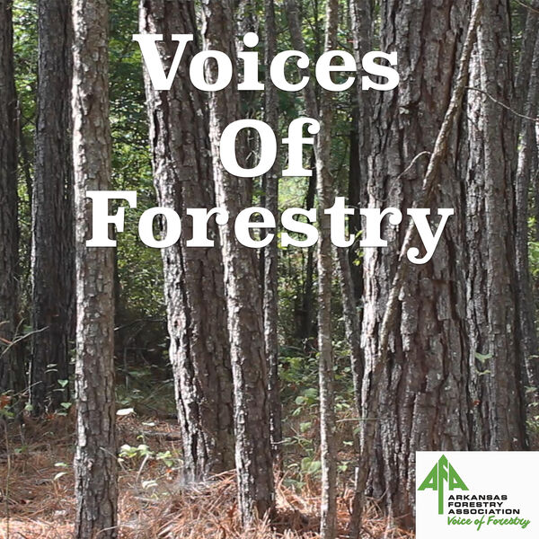 Voices of Forestry Podcast Artwork Image
