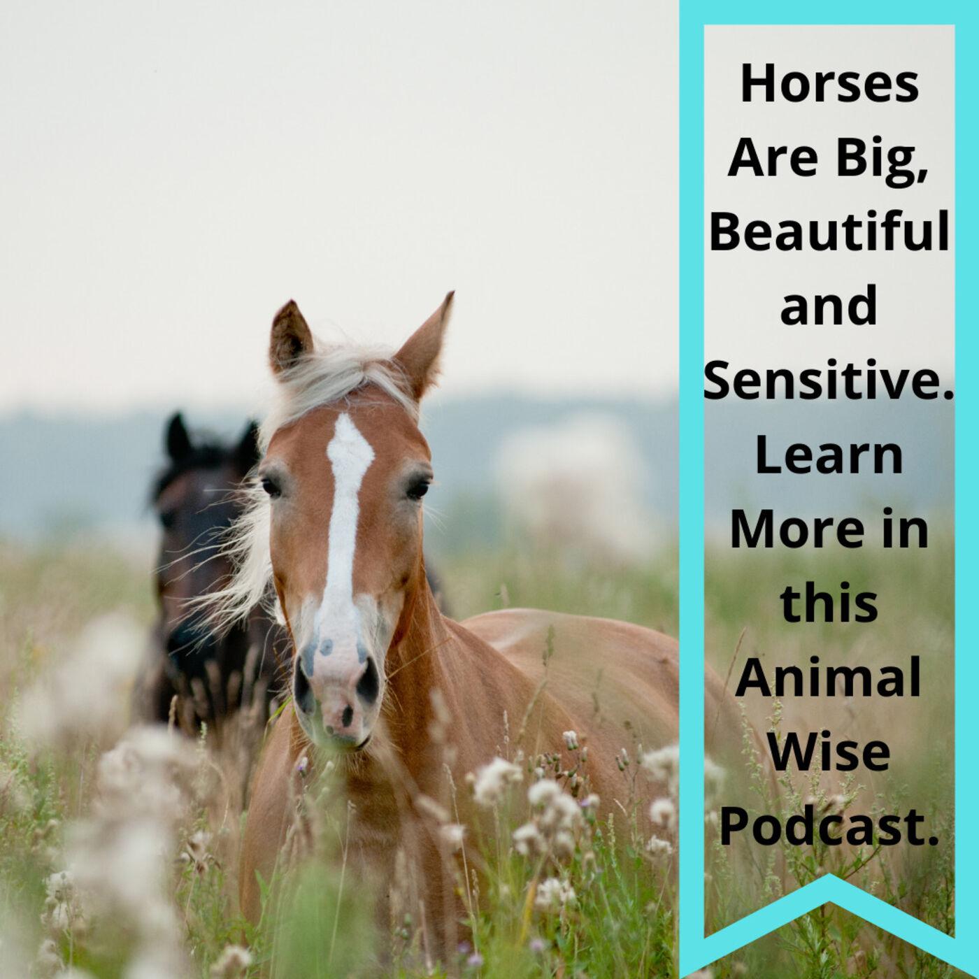 Horses Are Sensitive Too