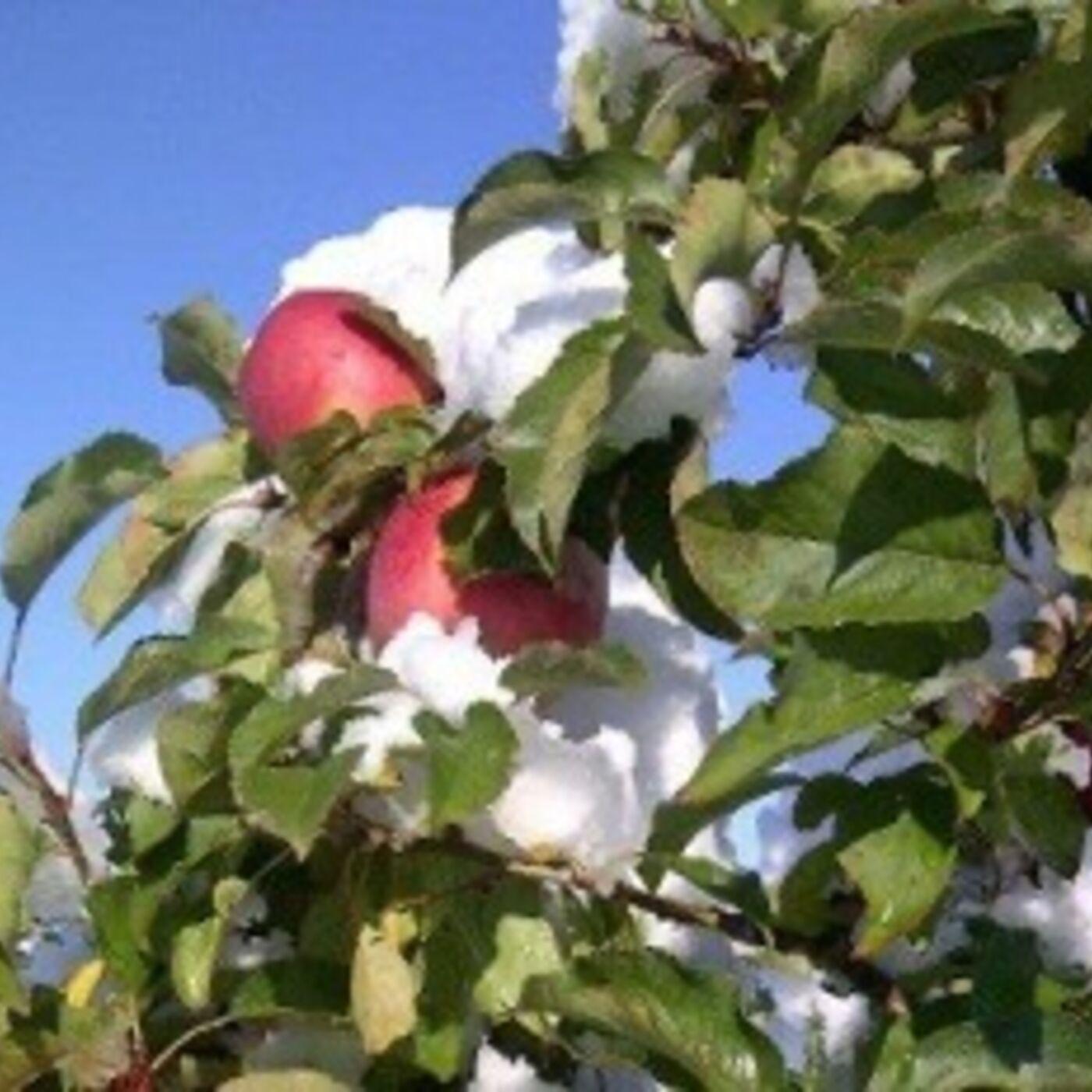 Season 2 Episode 2: Winter Pruning Tips