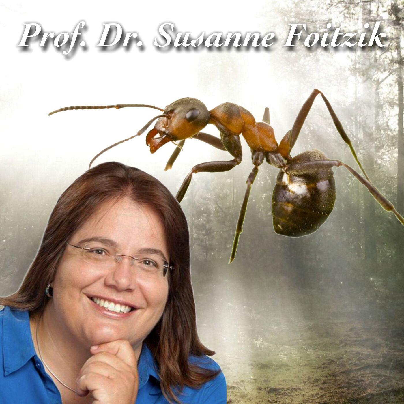 Sklavenhalter Ameise - Prof. Dr. Susanne Foitzik
