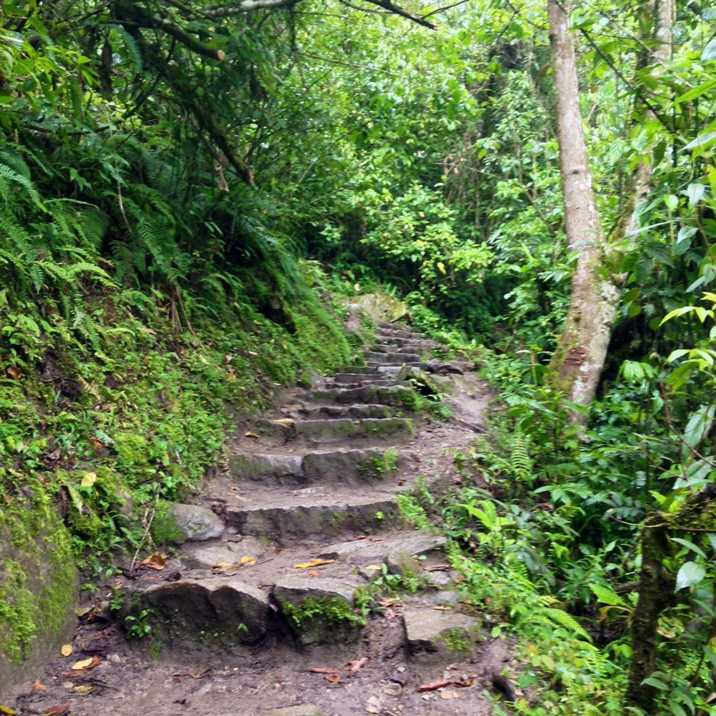 Guided Walking Meditation