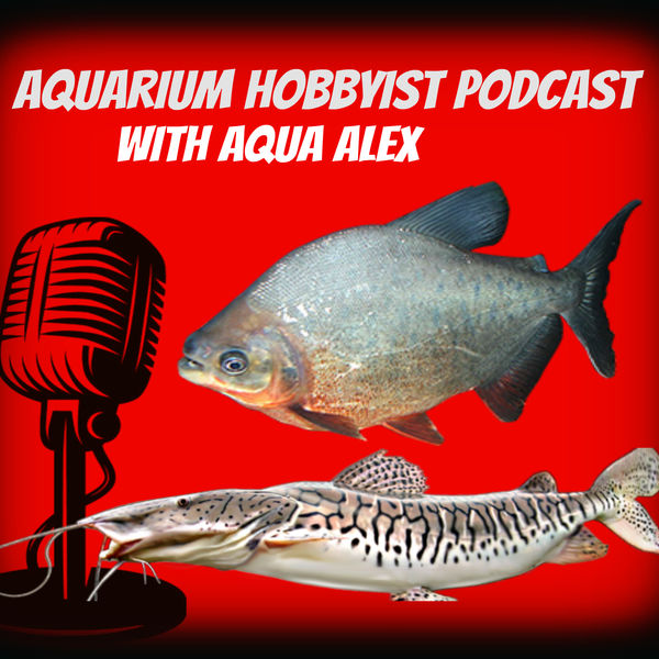 Aquarium Hobbyist Podcast Podcast Artwork Image