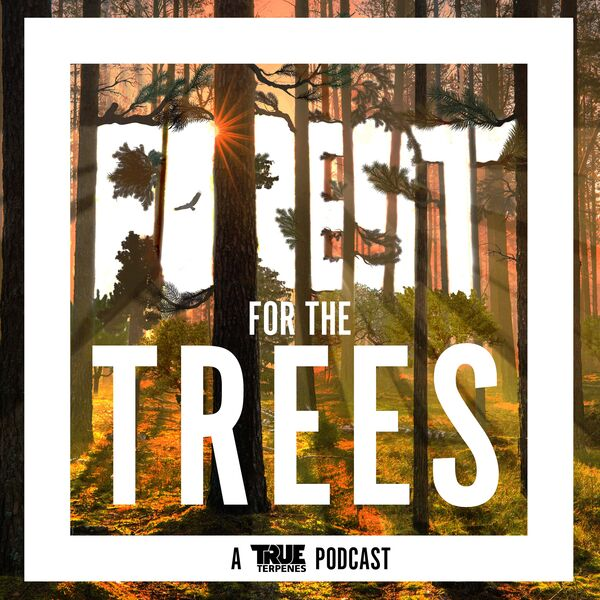 Forest For the Trees Podcast Artwork Image