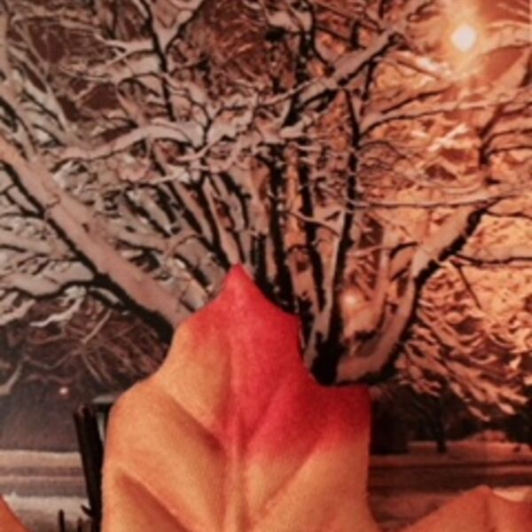 Blooming Boomers, Late Bloomers of Autumn and Winter Podcast Podcast Artwork Image