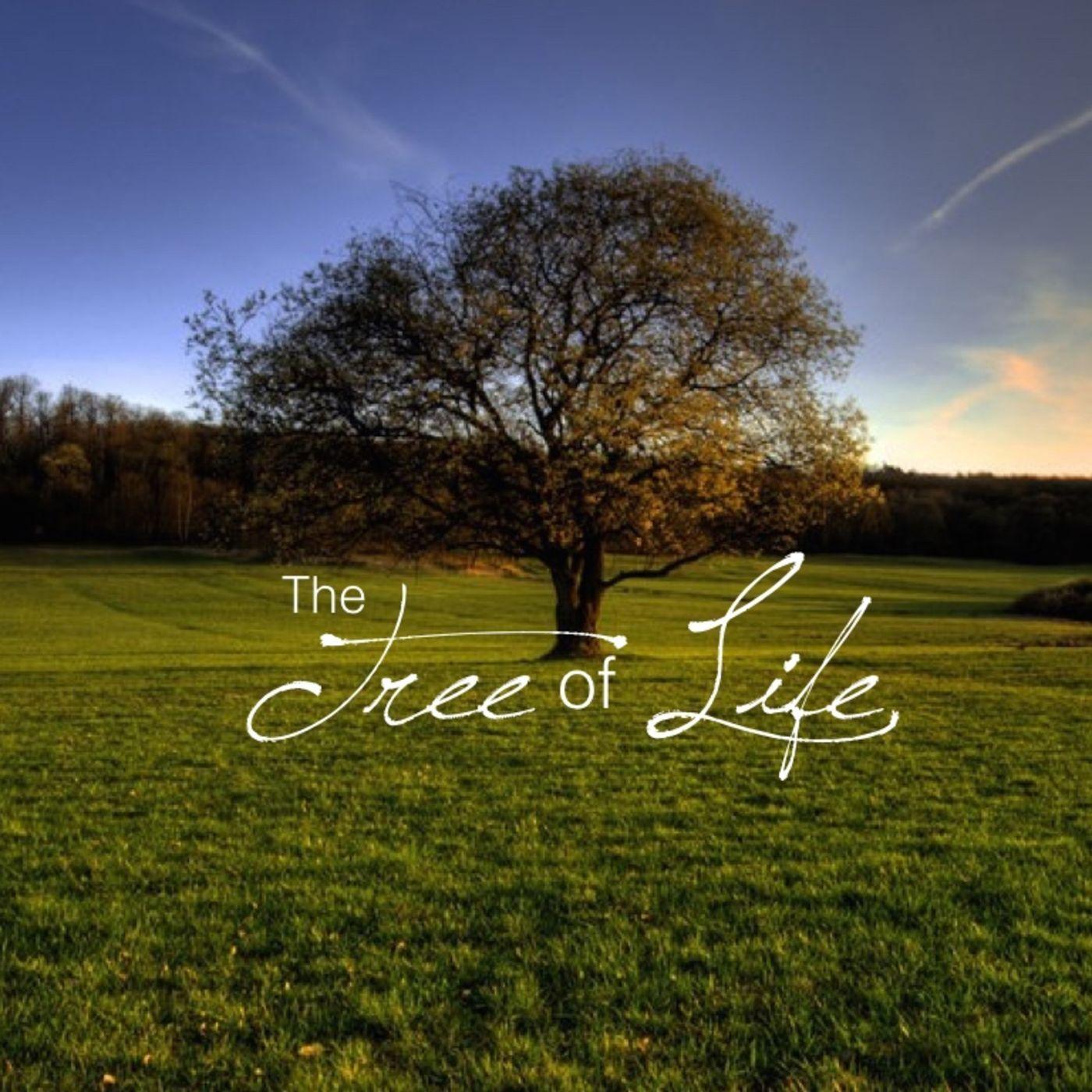 christian life austin the tree of life