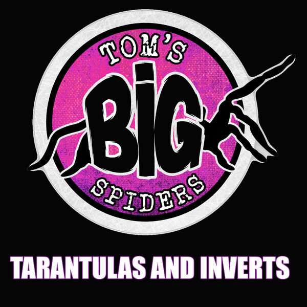 Tom's Big Spiders - Tarantulas and Inverts Podcast Artwork Image