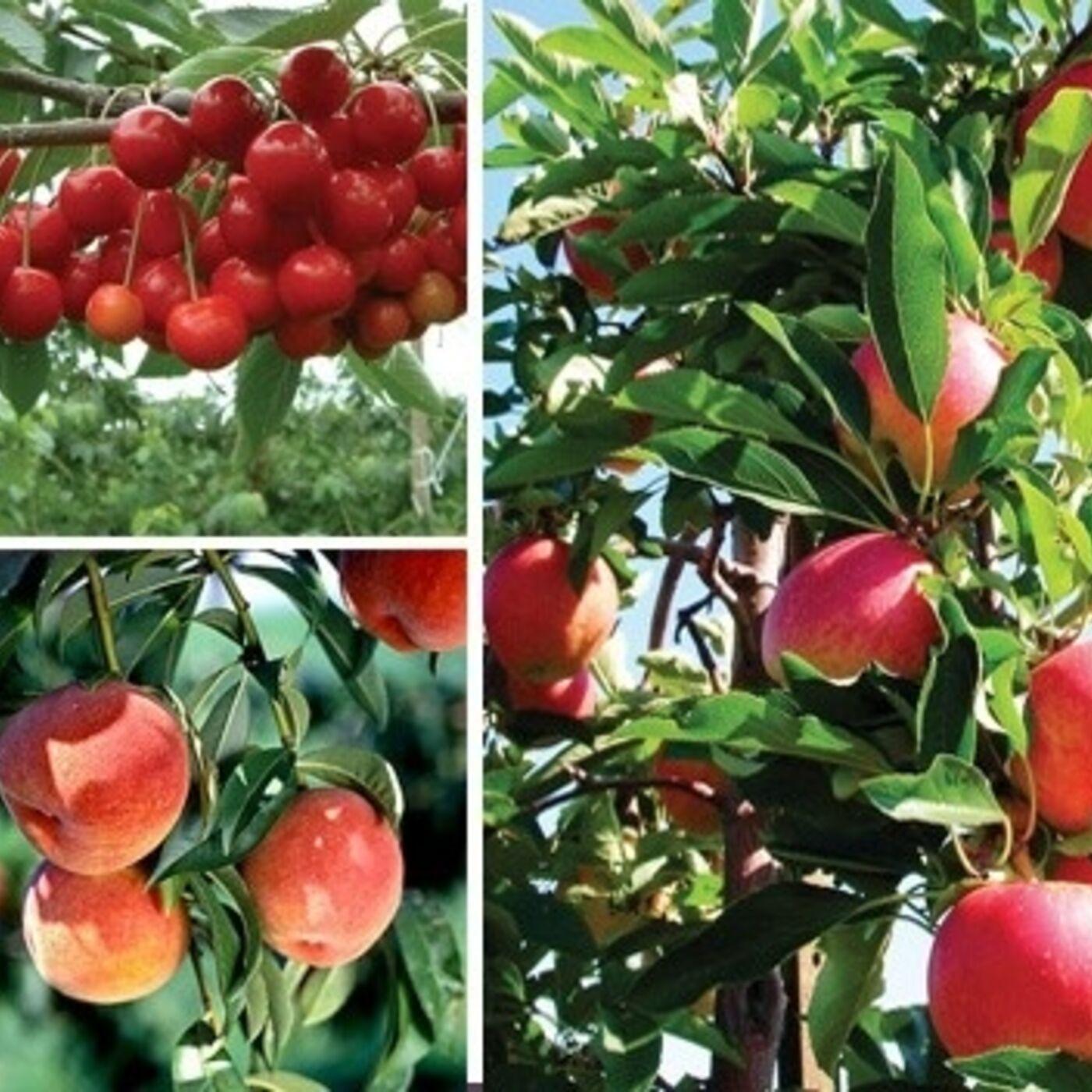 Fruit Trees with Greg Gayton
