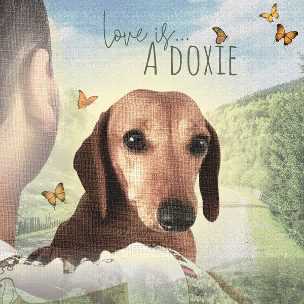 Love Is A Doxie Podcast Artwork Image