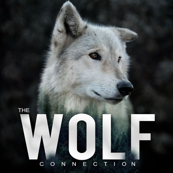 The Wolf Connection Podcast Artwork Image