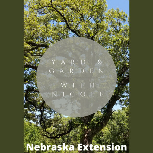 Yard and Garden with Nicole Podcast Artwork Image