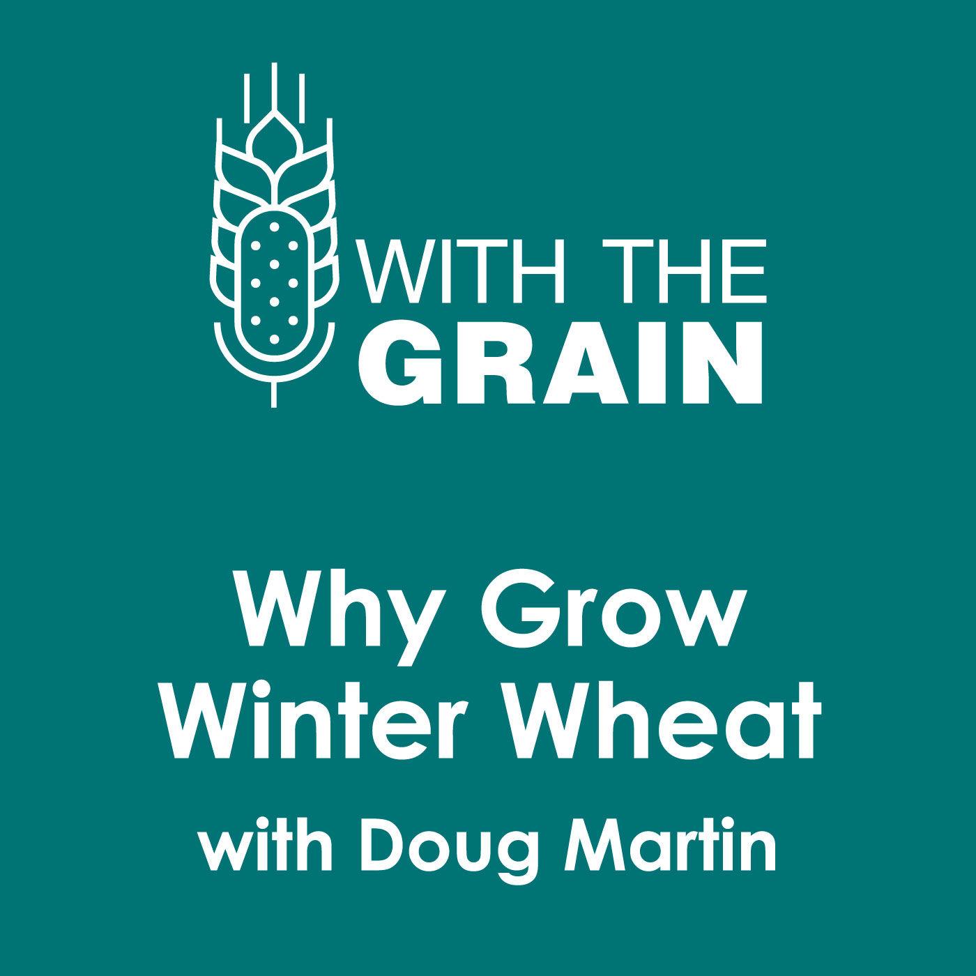 Why Grow Winter Wheat? with Doug Martin