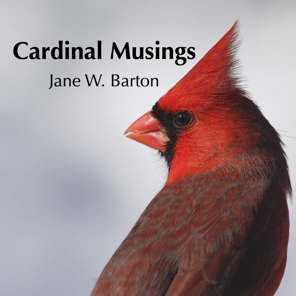 Cardinal Musings with Jane Barton Podcast Artwork Image