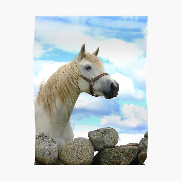 Connemara Pony Tales Podcast Artwork Image
