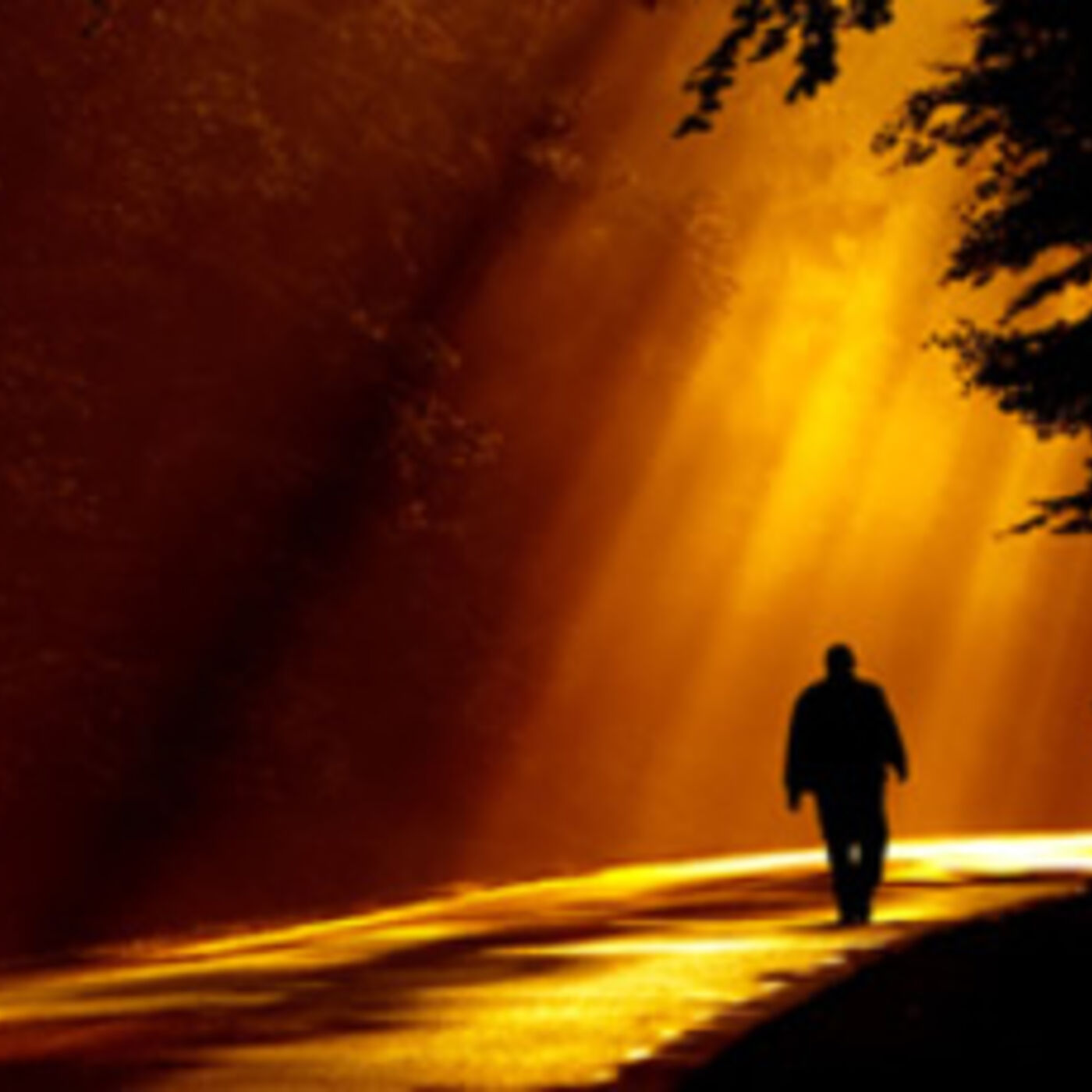 Episode 366 - The Golden Path in Life