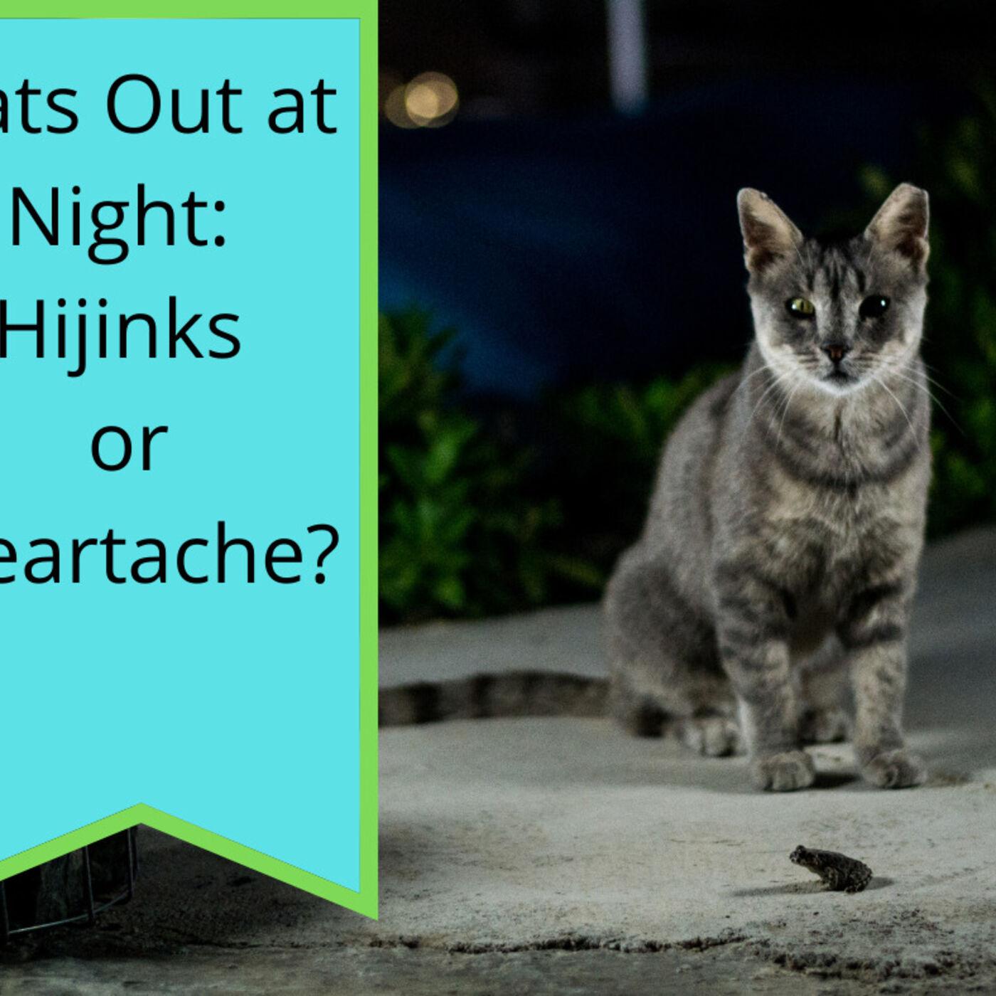 Cats on Night Patrol: Hijinks or Heartache?