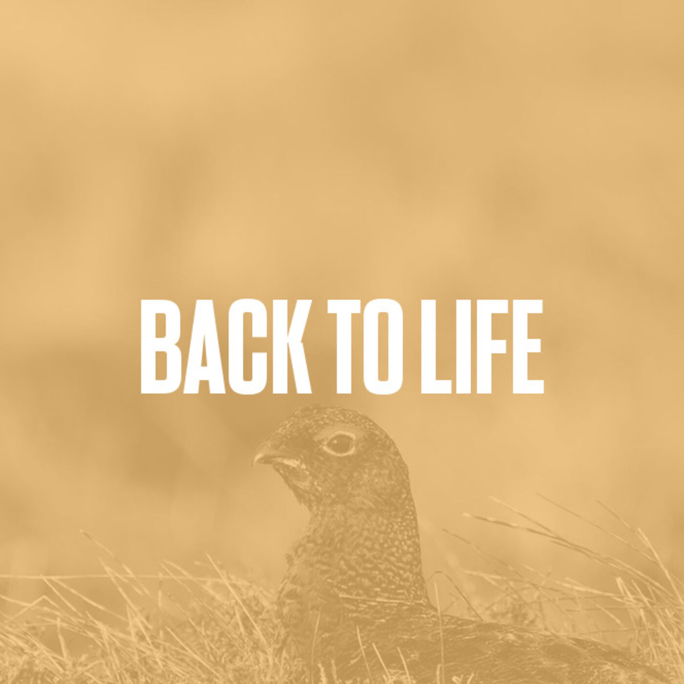 Episode #14 - Back To Life