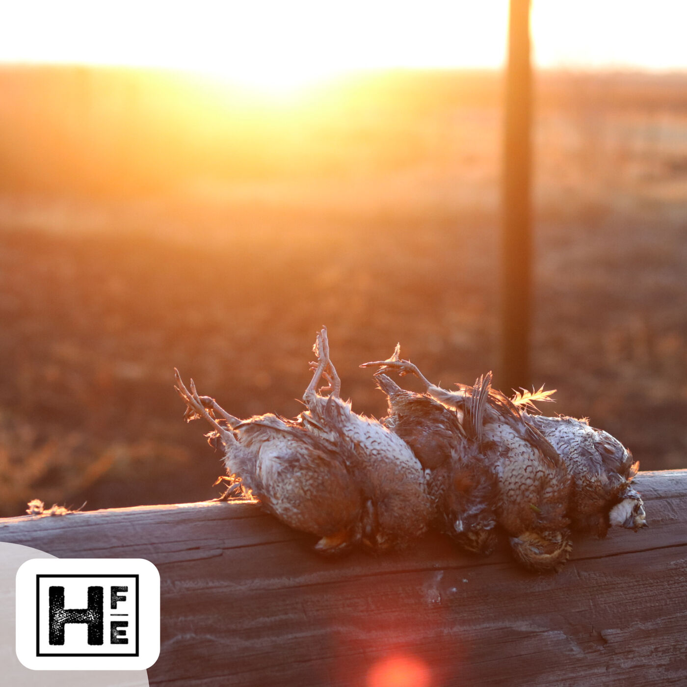 Chasing upland birds with John Wallace and Brandon Wilmoth on the Kansas Prairie