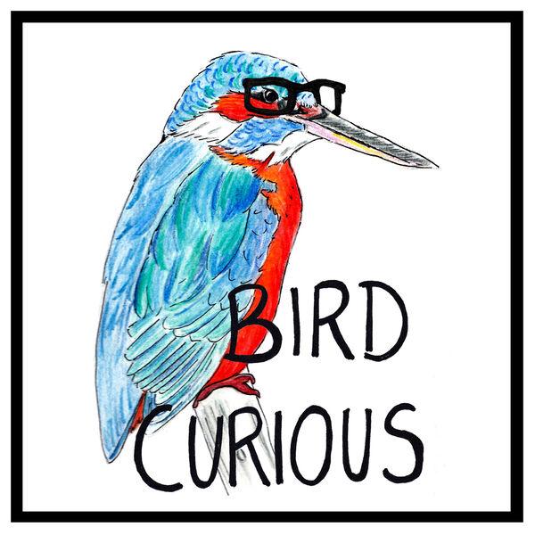 Bird Curious Podcast Artwork Image