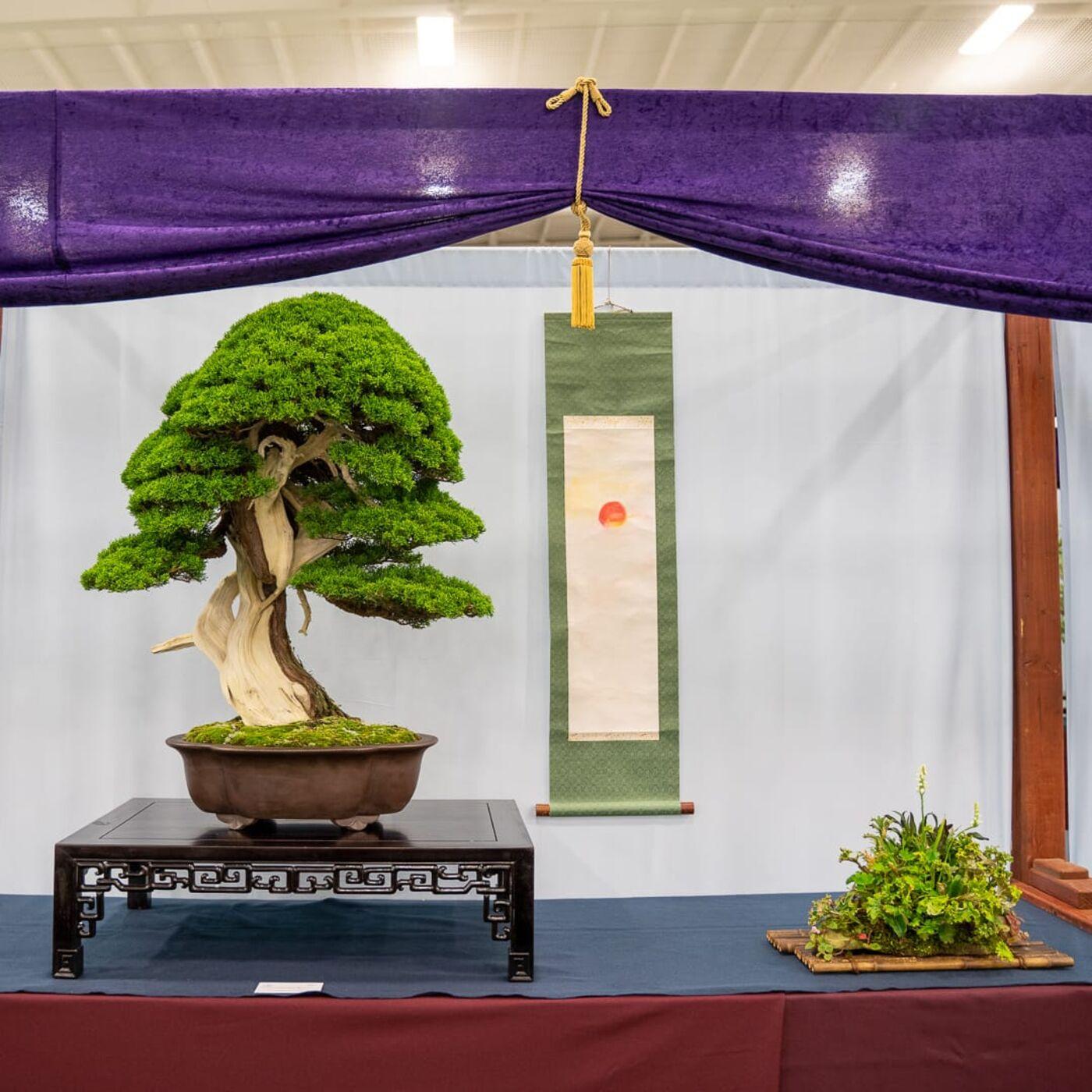 U.S. National Bonsai Exhibition Critique