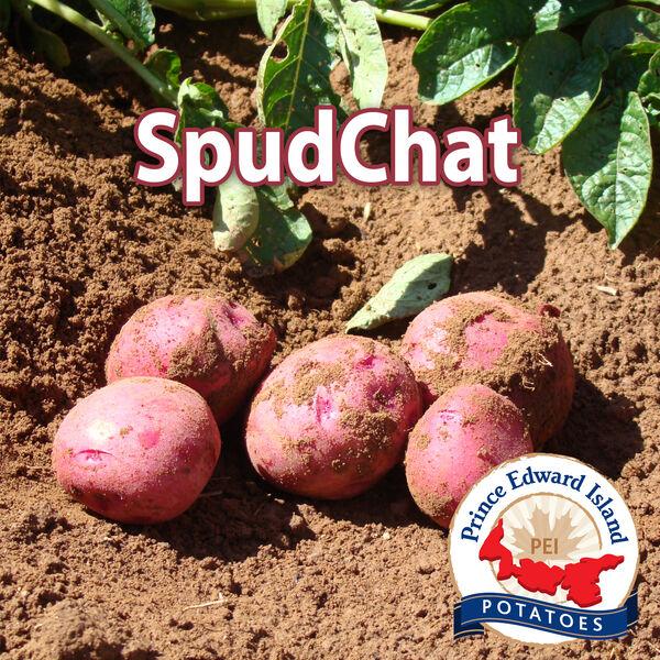 SpudChat Podcast Artwork Image