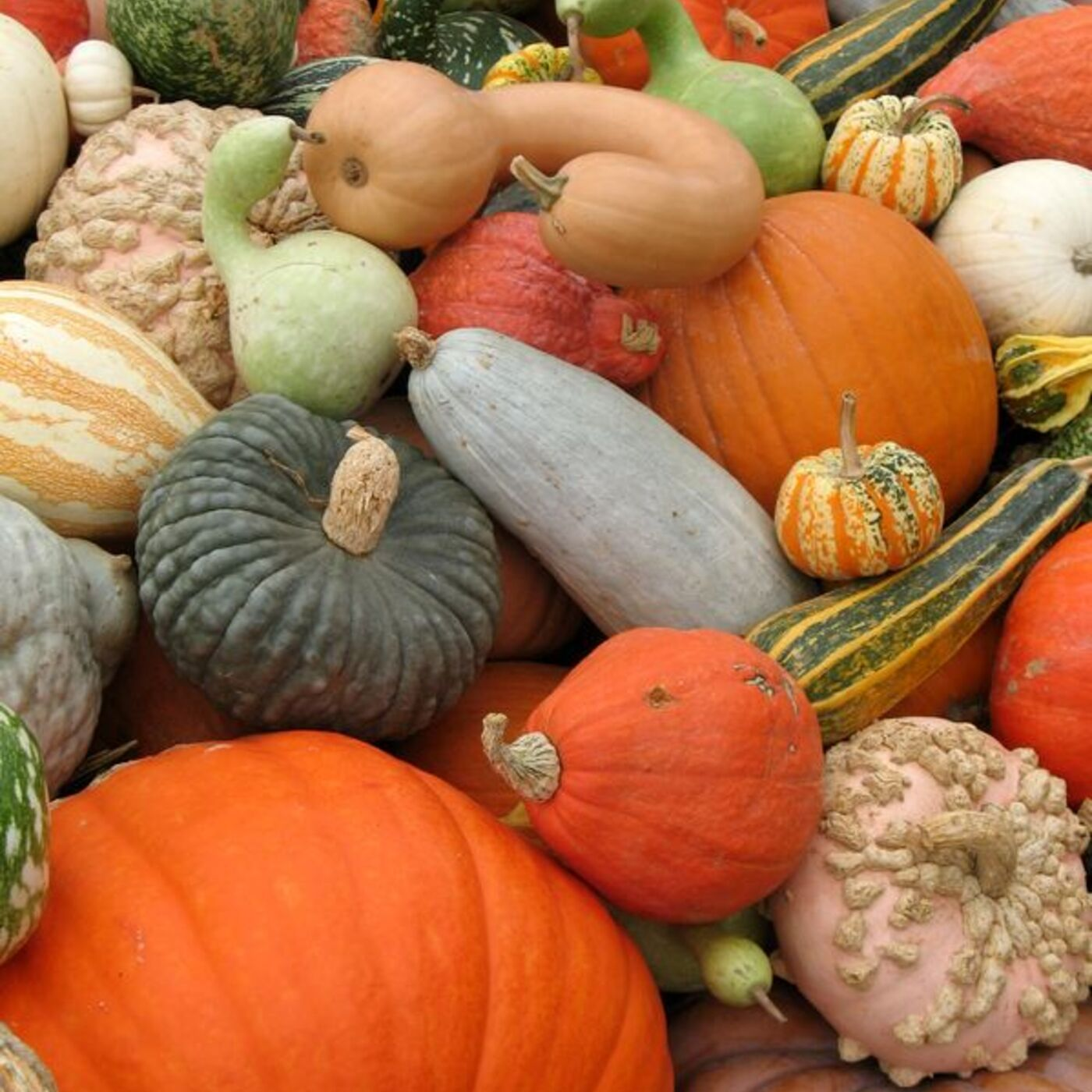 Home Canning Your Fall Pumpkins and Winter Squash