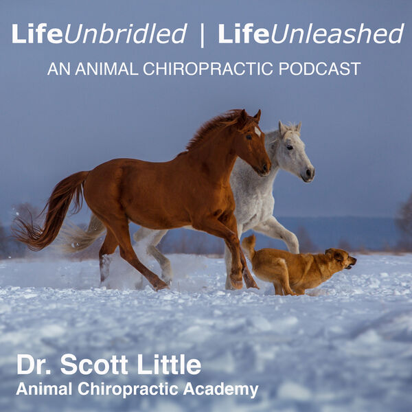 LifeUnbridled | LifeUnleashed: An Animal Chiropractic Podcast Podcast Artwork Image