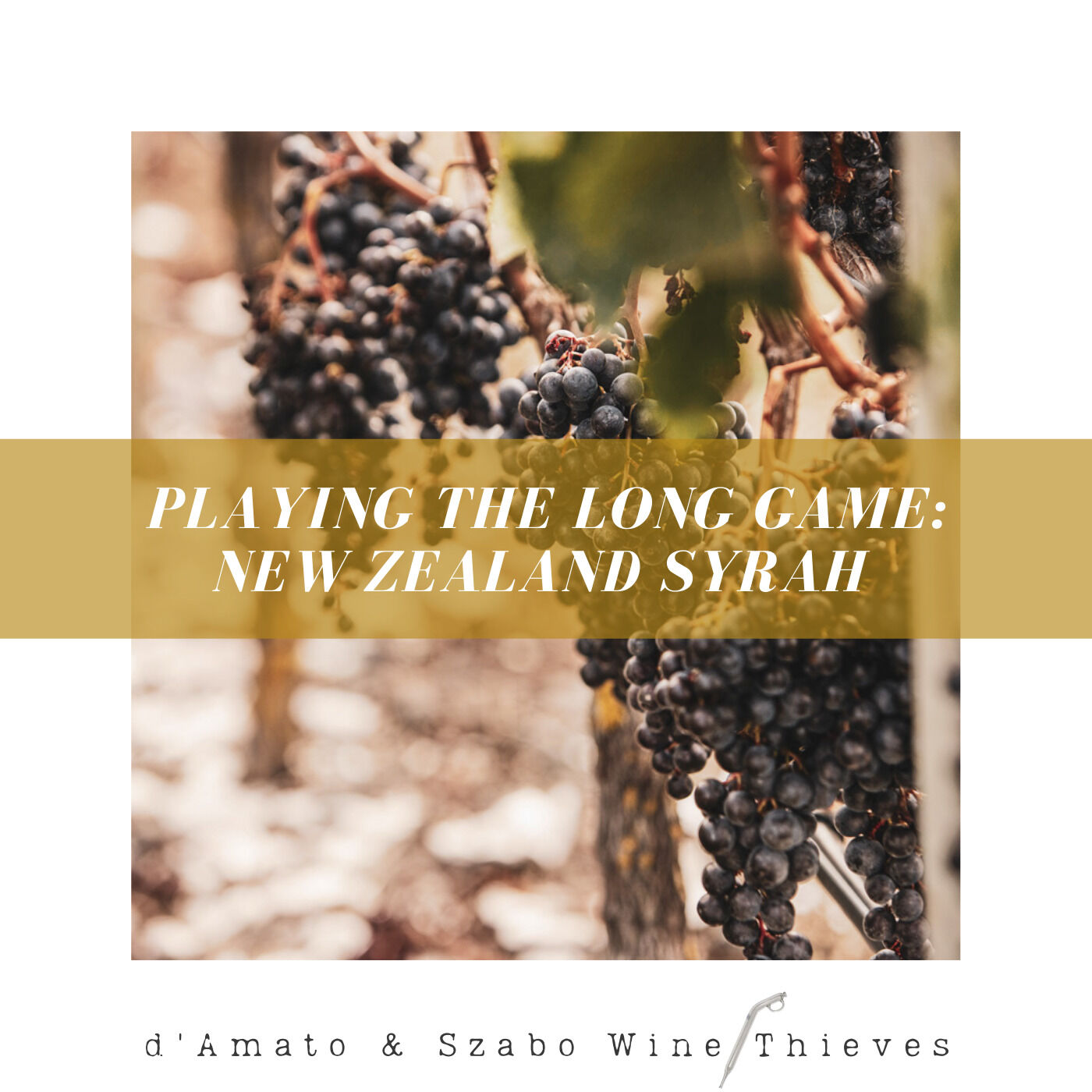 Playing the Long Game: New Zealand Syrah
