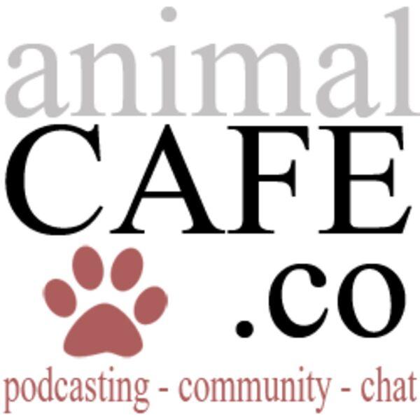 Animal Cafe  Podcast Artwork Image
