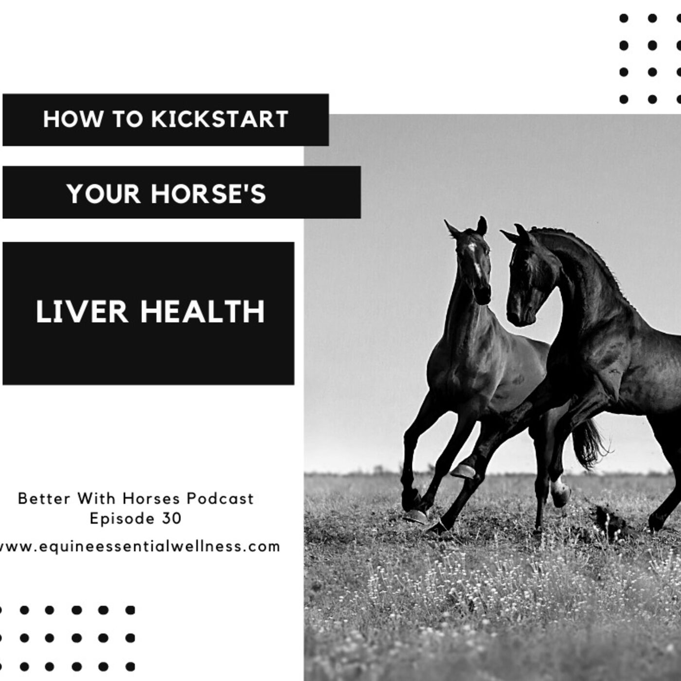 Episode 30 - How to Kickstart Your Horse's Liver Health
