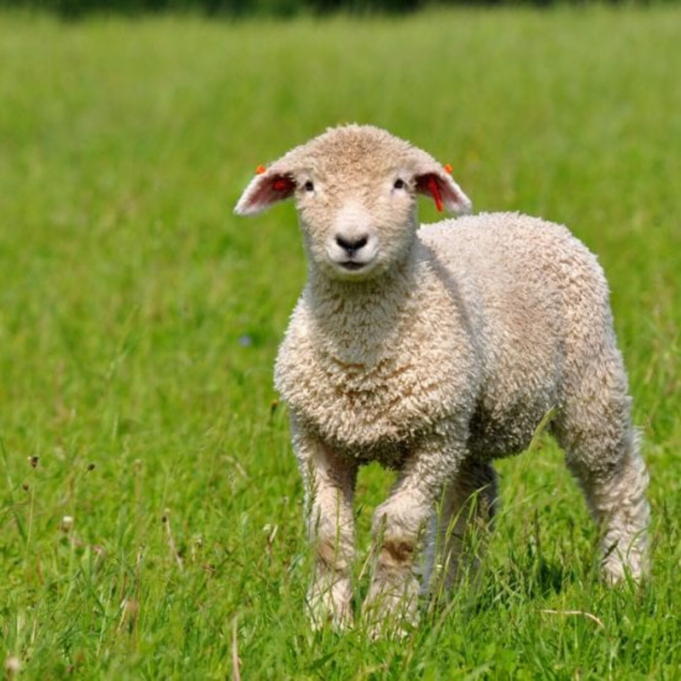 Episode 377 - How a Shepherd, Leader, Community, Parent Should See Things.