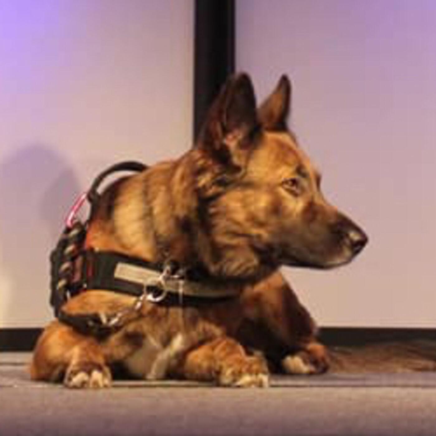 0151: Training Service Dogs with Jason and Sandra Sindeldecker
