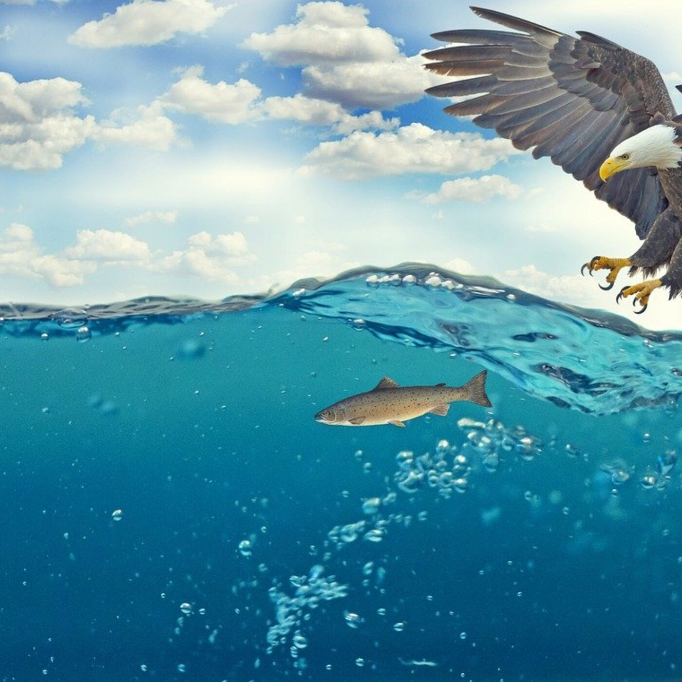 Book of Remembrance Chapter 3:42-50: The Fish of the Sea and the Foul of the Air