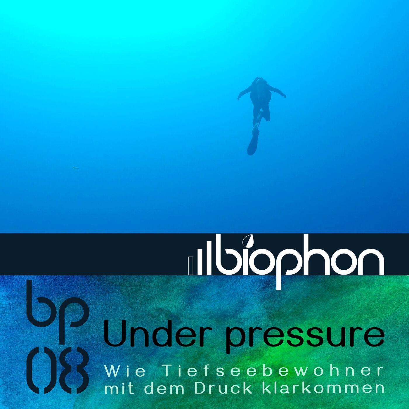 bp08: Under Pressure -  Wie Tiefseebewohner mit dem Druck klarkommen