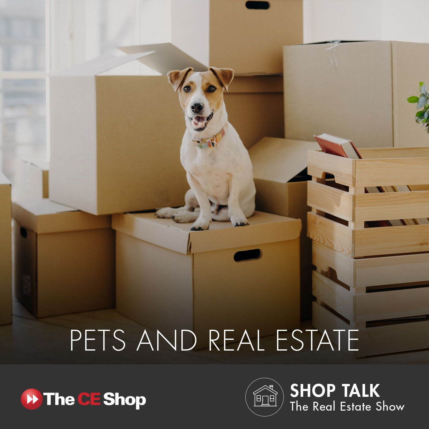 67: Pets and Real Estate