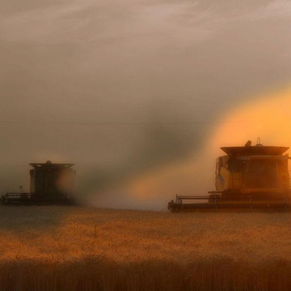 Idaho Farm Bureau's Podcast Podcast Artwork Image
