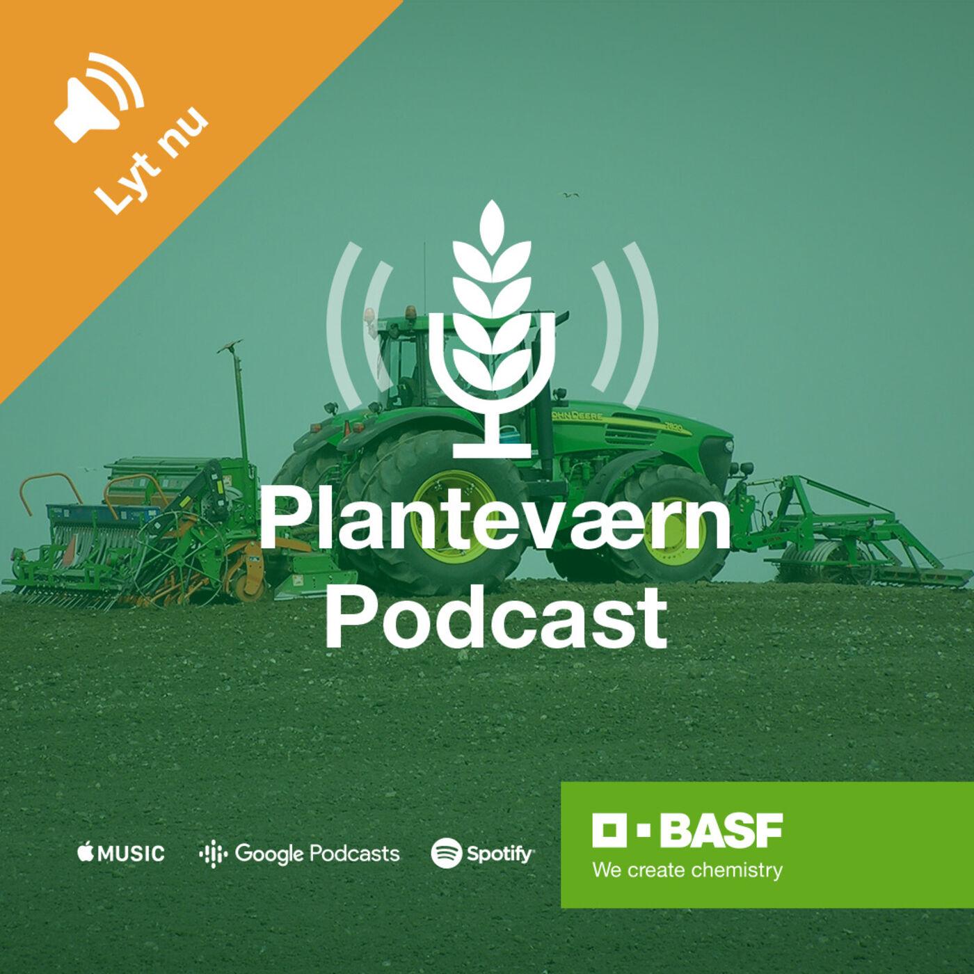 Planteværn S1 E6: Valg af rapssort med Dorthe Kappel og Søren Severin
